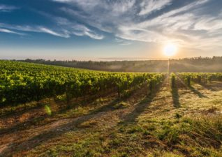 A Wine Getaway In The USA
